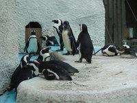 Penguin_2